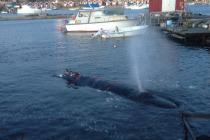 Кит в шведском порту