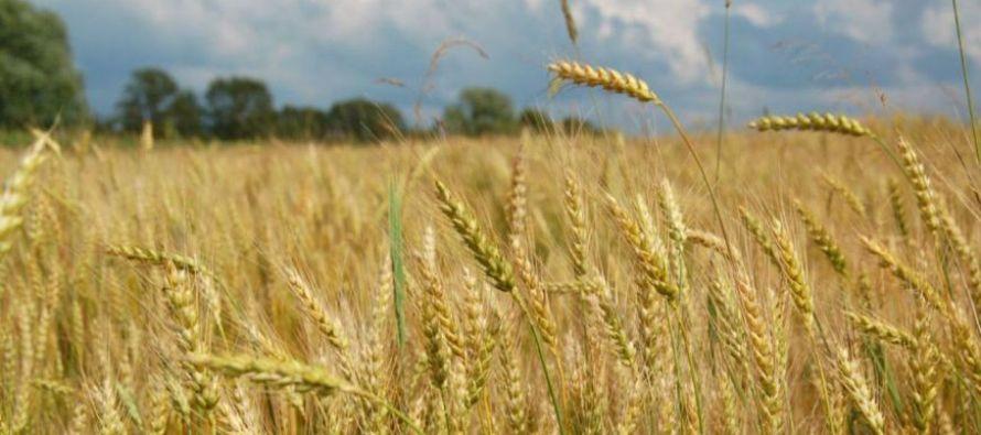 Экспорт сельхозпродукции из РФ приблизился к 20 млрд долларов