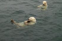 Навигационно-гидрографическое обеспечение Арктики