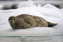 Гидрографы Балтийского флота спасли тюленя