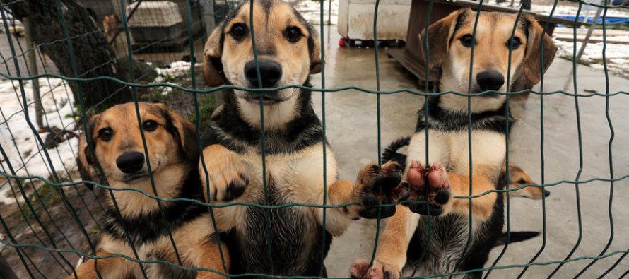 Военные помогали в приюте для животных